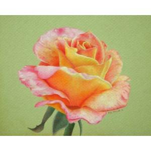 Rose of Sunset