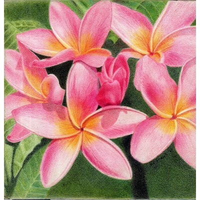 Thoughts of Plumeria